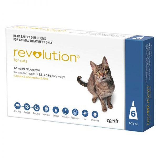 revolution-cat-blue_6